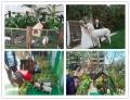 宜昌市百鳥展覽出租鸚鵡表演租賃