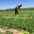 河北潤澤玻璃鋼拱棚支架花卉蔬菜育苗棚