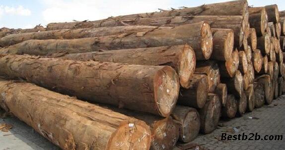 加拿大木材榉木进口报关商检