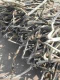 六安市銅芯電纜回收正規廠家 廢舊變壓器回收