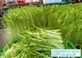 益康園芽苗菜種植技術老師介紹光照對于芽苗菜的影響