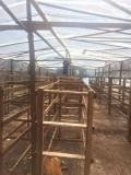胡蜂養殖網超結實加厚25目全新料虎頭蜂養殖網