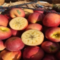 123苹果苗、123苹果苗批发
