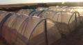 螞蚱專用紗網拱形棚抗老化3-5年定制各種寬幅大廠