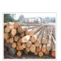 国外木材进口要注意的事项