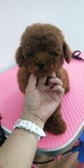 深圳寶安南山批發寵物貓狗的實體店 去哪買寵物貓狗放心