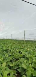 供應豆蟲養殖紗網大寬幅定做特結實