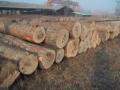 廣州黃埔港東南亞非洲木材進口清關流程手續-博雋供