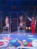 大型馬戲團表演承接地產演出活動