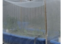 豆蟲養殖防蟲網純新料抗氧化廠家直銷