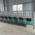 譽發畜牧供應加厚熱鍍鋅定位欄限位欄豬用圍欄