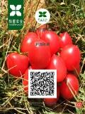 怡萱农业粉贝贝圣女果2000g产地直供绿色食品