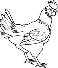 各类鸡品品质好网点配送公司 专业配送医院单位工厂鸡鸭鹅产品公