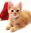 小土猫猫咪好养