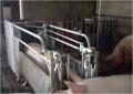母猪电子饲喂站 洮南母猪智能喂养设备厂家