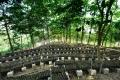 贵州中科农经宝灵圣草金线莲种植 投资创业取得成功